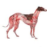 """Greyhound Permutation 6 (of 6)"""