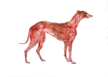 """Greyhound Permutation 1 (of 6)"""