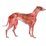 """Greyhound Permutation 1 (of 6)"""