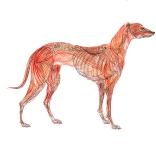 """Greyhound Permutation 3 (of 6)"""