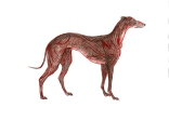"""Greyhound Permutation 4 (of 6)"""