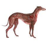 """Greyhound Permutation 4 (of 6)"""
