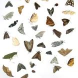 """Bugs of Chautauqua #2"""