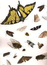 """Bugs of Chautauqua #3"""