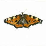 """""""Small Tortiseshell Butterfly"""""""